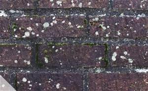 Weißer Schimmel An Der Wand : wohnen ~ Michelbontemps.com Haus und Dekorationen