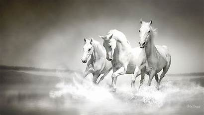Horse Wallpapers Horses Pc Running Snow Wild
