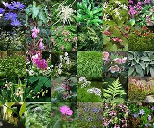 Parterre De Plante : 30 plantes vivace pour un parterre sec et ombrag ~ Melissatoandfro.com Idées de Décoration