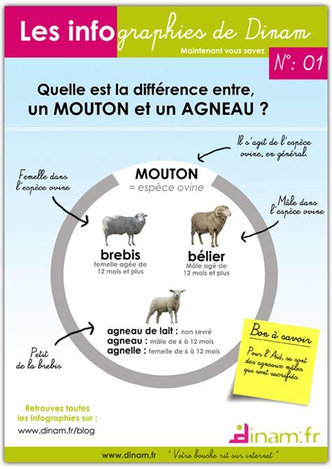 quelle est la diff 233 rence entre un mouton et un agneau