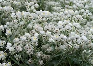 Was Kann Man Im August Noch Pflanzen : august was bl ht im blumengarten bl tezeit hochsommer ~ Lizthompson.info Haus und Dekorationen