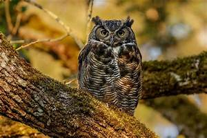 What Is an Owl? - Special Characteristics