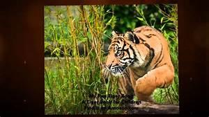 Book A Tiger Com : my fun tiger book a tiger book for children youtube ~ Yasmunasinghe.com Haus und Dekorationen