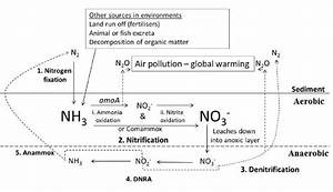 Schematic Representation Of The Nitrogen Cycle In