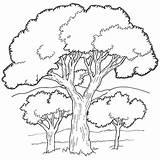 Coloring Oak Tree Kerra sketch template