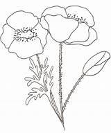 Coloriage Coquelicot Teteamodeler Fleur Dessin Fleurs Maci Flores Dibujos Imprimer Coloriages Enfants Colorear Natura Coloring Printemps Colorat Colorare Embroidery Disegni sketch template