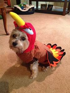 rubies costume pany turkey dog costume large chewy f8d a