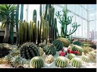 lovely cactus garden design Cactus garden design ideas pictures - YouTube