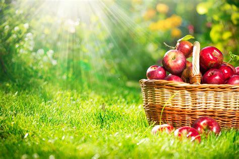 september orchard visit  retina ultra hd wallpaper