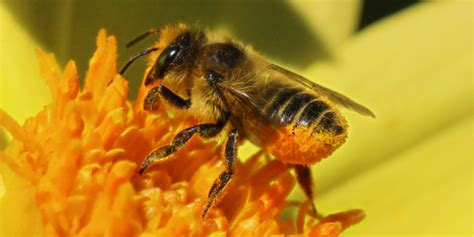Images Of Bees The Science Of Bees Honey Bee Suite