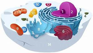 Eukaryotic Animal Cell Structure  A Visual Guide