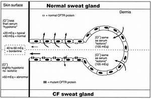 28 Sweat Gland Diagram