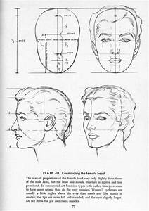 Proportion Guide For How To Draw The Female Head  From The