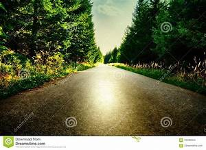 Asphalt, Road, In, Spruce, Tree, Forest, At, Summer, Day, Sunlight, Sun, Relaxing, Atmosphere