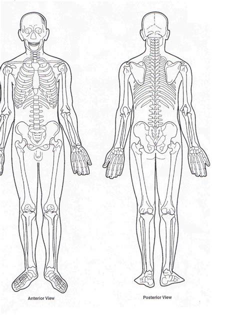 Muscle charts of the huma. Human Muscles Diagram : human-leg-muscles-diagram ...