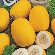 Peach Mango Melon Vine
