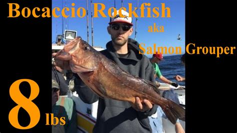 salmon grouper bocaccio rockfish