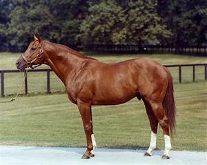 Thoroughbred Horse Naming Rules and Requirements