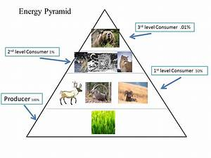 Ecological Pyramid Decomposers | www.imgkid.com - The ...