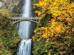 Nature, Forest, Bridge, Autumn, Amazing, Beauty, Waterfall