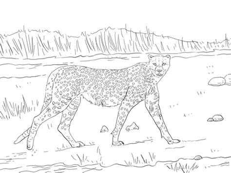 tanzanian cheetah coloring page  printable coloring