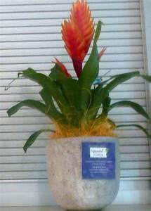 Plante D Intérieur Haute : plante interieure haute ~ Dode.kayakingforconservation.com Idées de Décoration