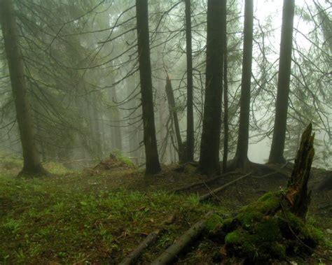fog forest wallpaper wallpapersafari