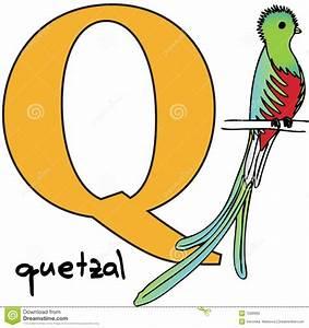 Alfabeto Animal Q (quetzal) Imágenes de archivo libres de regalías Imagen: 7599909