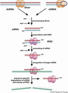 What is RNAi and how is it used in Meloidogyne incognita ...
