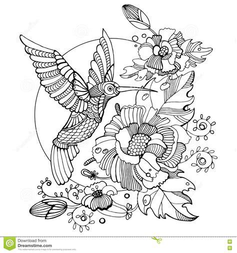 Hummingbird Coloring Book For Adults Vector Vector