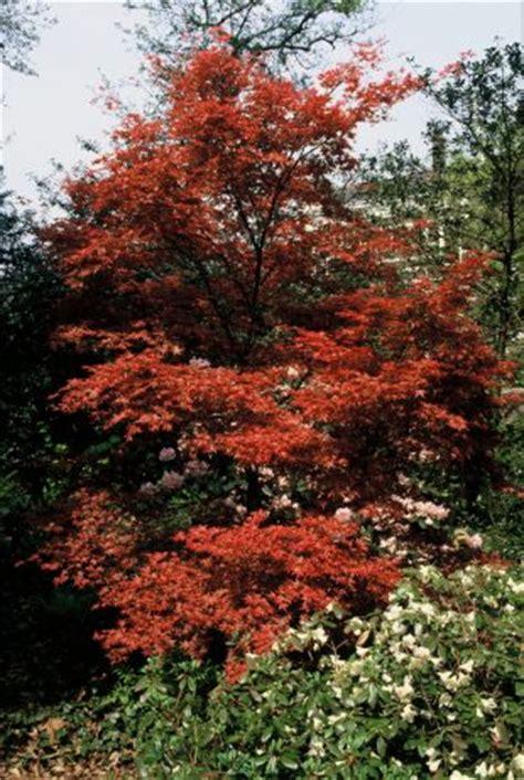 photo gallery trees  shrubs   gardencom