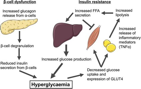 proteincoupled receptors targeting insulin resistance