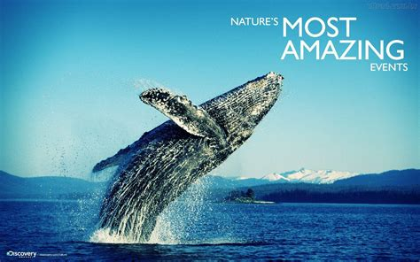 Discovery Channel Animal Wallpapers - discovery channel wallpapers wallpaper cave