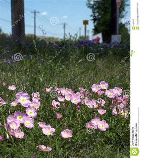 list of flowers that come back every year wild flower stock photo image 4969910