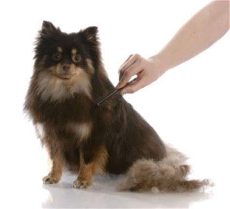 grooming double coated dogs