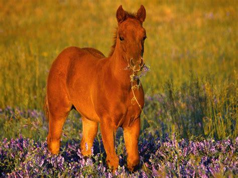 cute foal horse wallpaper  cute downloads