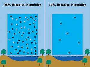 Ensuring the correct humidity for pet Leopard geckos ...
