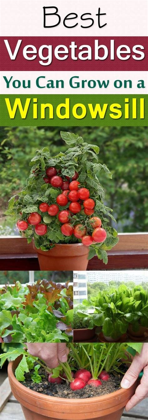 Windowsill Vegetable Garden by Windowsill Vegetable Gardening Diy Gardening Ideas