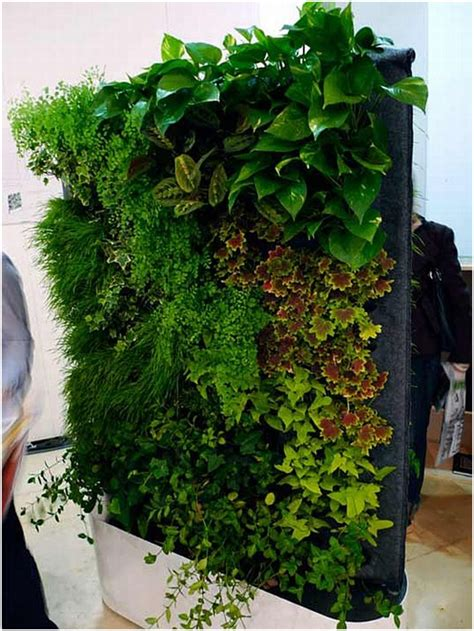 easy to build indoor green wall for home purification