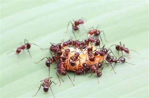 appoint  pest control service  deal