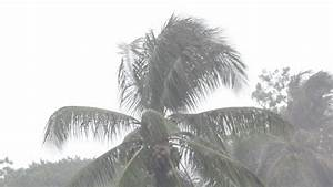 Trees Blowing In Very High Winds And Hard Rain Stock ...
