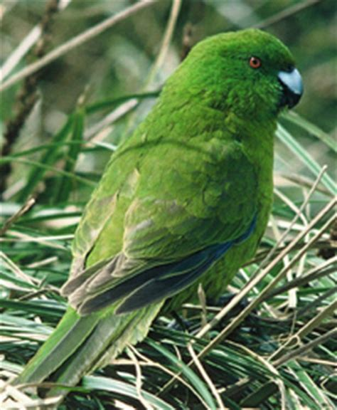 Green Bankers L Nz by Terranature New Zealand Ecology Antipodes Island