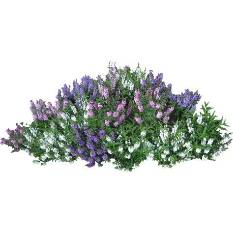 Bushes PNG Image Image With Transparent Background Tree