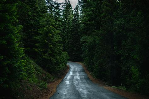 Free picture: trees woods forest road