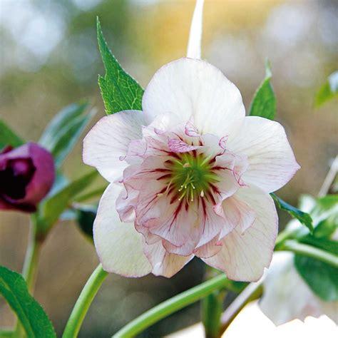 i fiore in edicola dal 24 gennaio casa in fiore di febbraio cose
