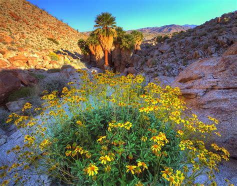 beauty  save california wildflowers  photographer