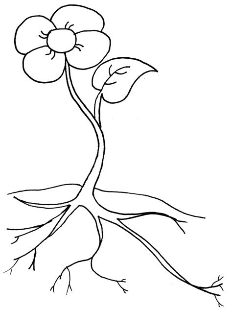 large flower template printable coloring home