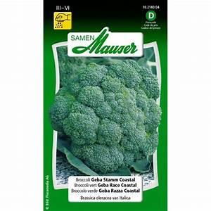 Brokkoli Samen Kaufen : broccoli geba stamm coastal 10214004 samen kaufen pflanzen ~ Orissabook.com Haus und Dekorationen