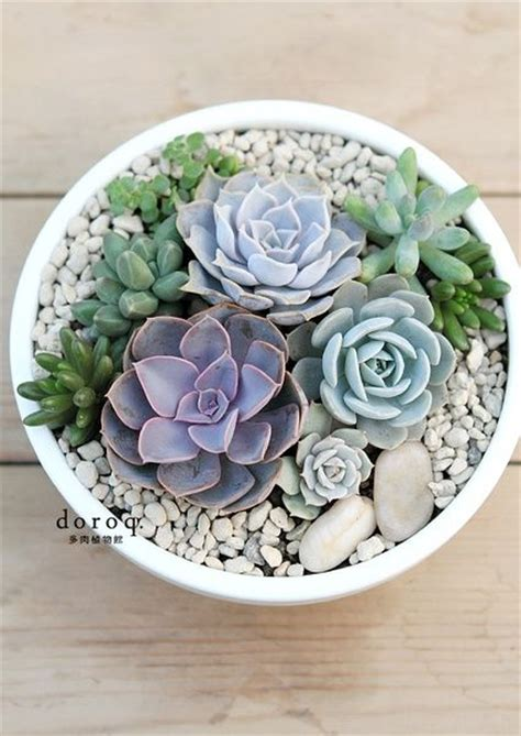 potting succulents indoors potted succulents cacti succulents pinterest gardens succulent display and chang e 3