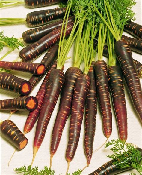 carrot purple haze   america selections